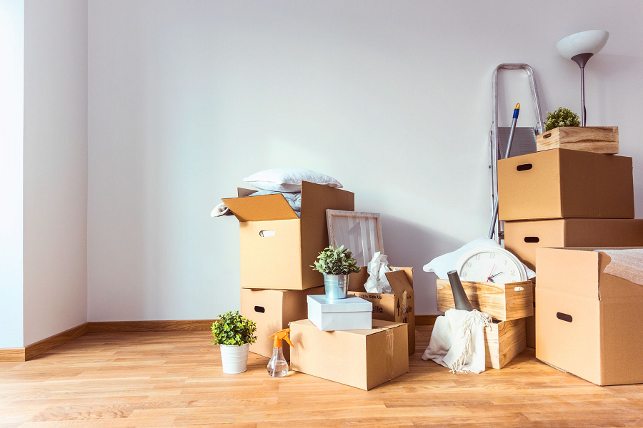 How To Relocate Plants Safely During A Move