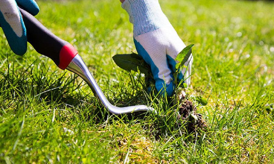 Why Your Yard Needs Weed Control