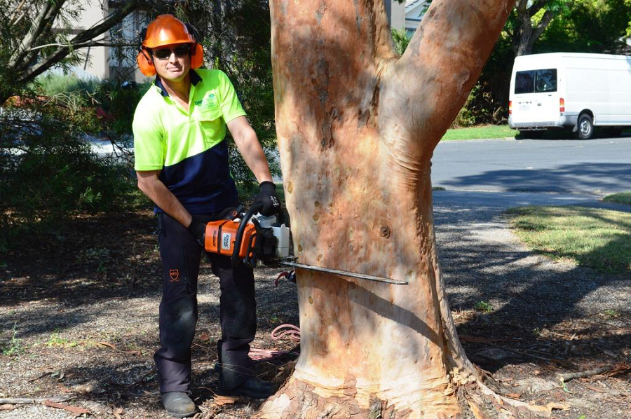 Hiring a Professional Tree Removal
