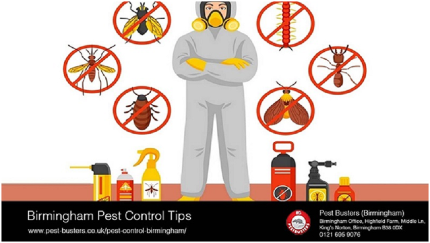 Birmingham Pest Control Tips and Tricks