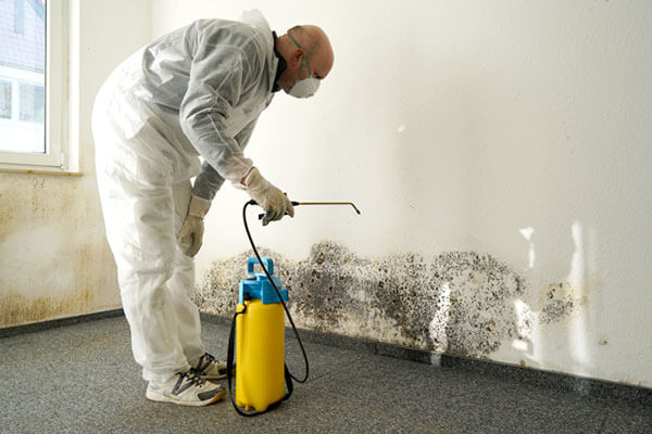 What Mold Removal Services Can Deal You