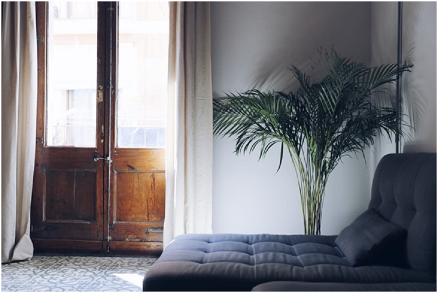 Blinds Vs Curtains: Which Is Best If You Love Indoor Plants?