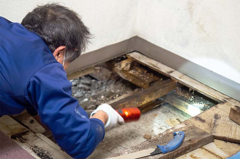 How to Handle Mold in Your Home?