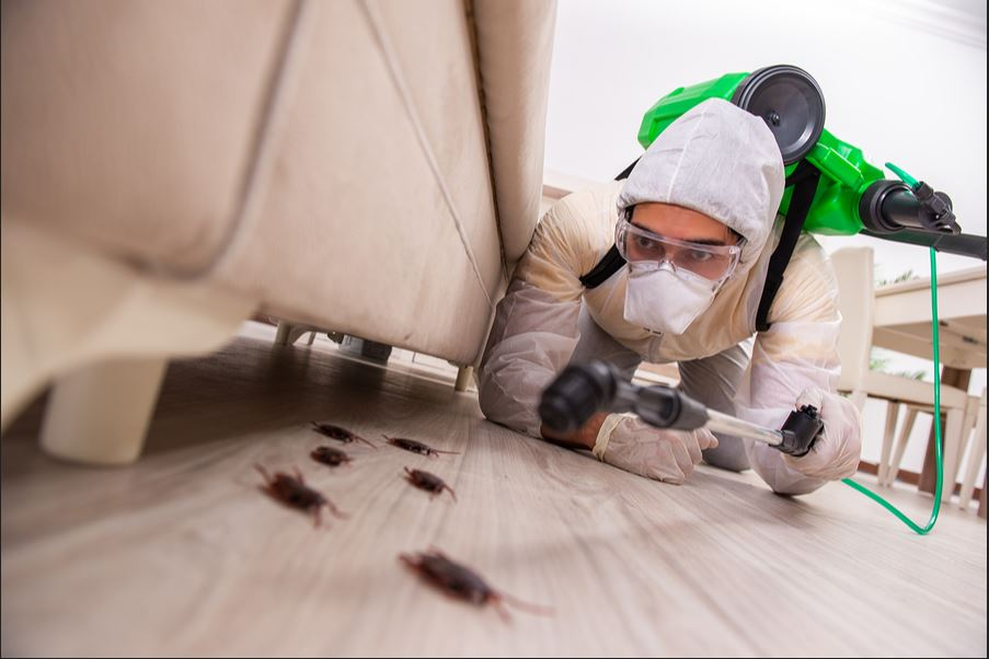 Best Pest control remedies which actually work in 2021