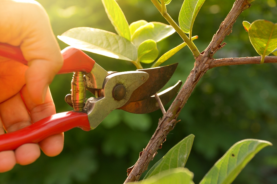 How Does Pruning Help Trees?